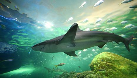 visit the ripleys aquarium of canada