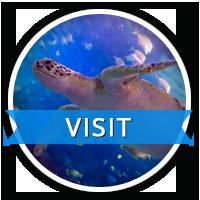 VISIT Ripleys Aquarium of Canada Toronto