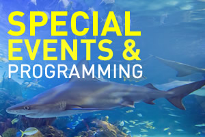 SpecialEvents-2