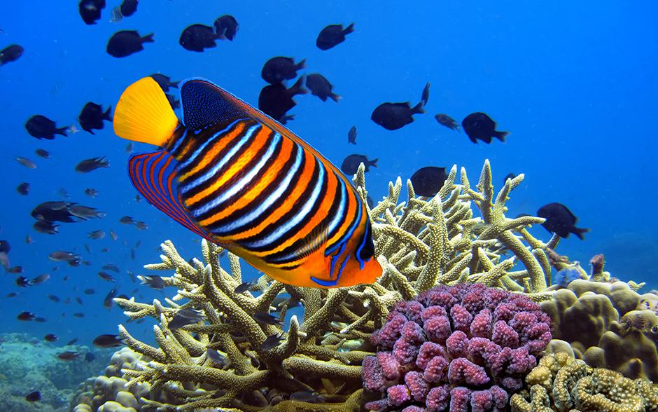 Colourful Fishes For Aquarium Images