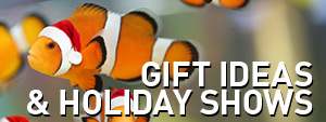 Gift Ideas & Holiday Shows