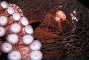 featured animals ripleys aquarium of canada