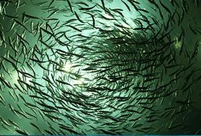 fishy fun facts ripleys aquarium of canada