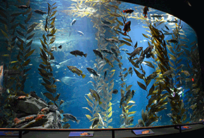 other special features ripleys aquarium of canada