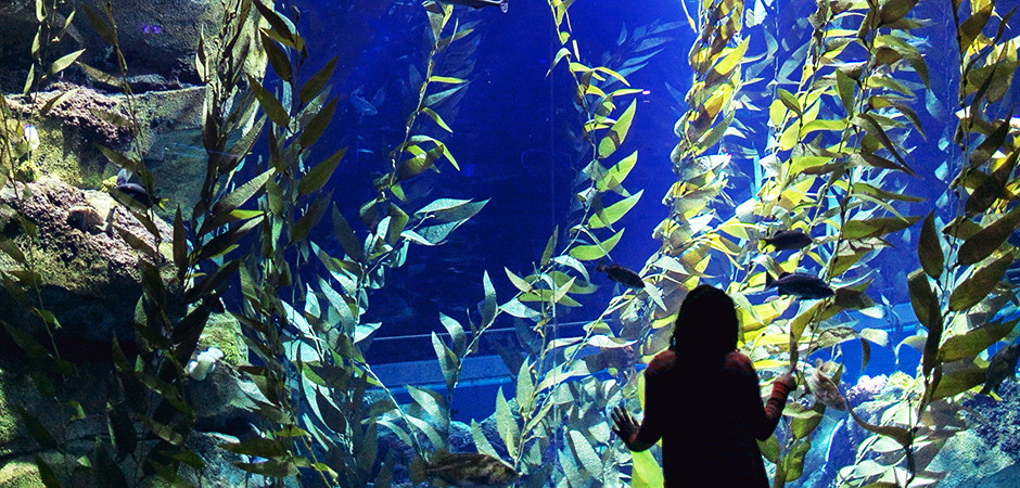 aquarium-photography-tips