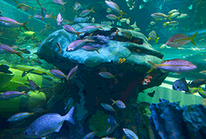 fishy fun fact ripleys aquarium of canada