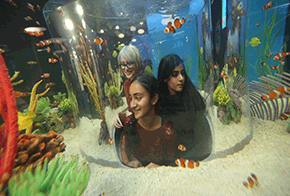 fishy fun fact animals ripleys aquarium of canada