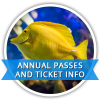 Pass and Ticket Info
