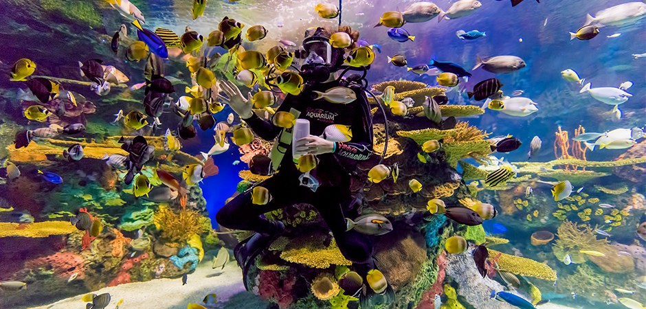 ripleys-aquarium-canada-rainbow-reef