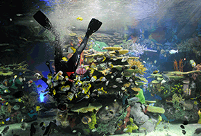 special features ripleys aquarium of canada