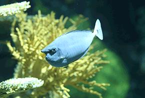 fishy fun fact ripleys aquarium of canada