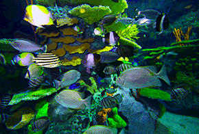 featured animals ripleys aquarium of canada