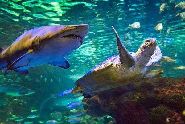 dangerous lagoon turtle and shark