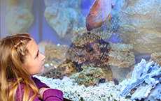 educational program ripleys aquarium