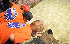 Ocean Explorers Club Thumbnail. Kids Petting a Stingray