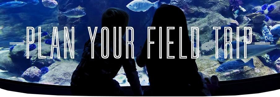 Plan Your Field Trip Aquarium Of Canada
