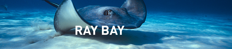 ray bay - ripleys aquarium of canada