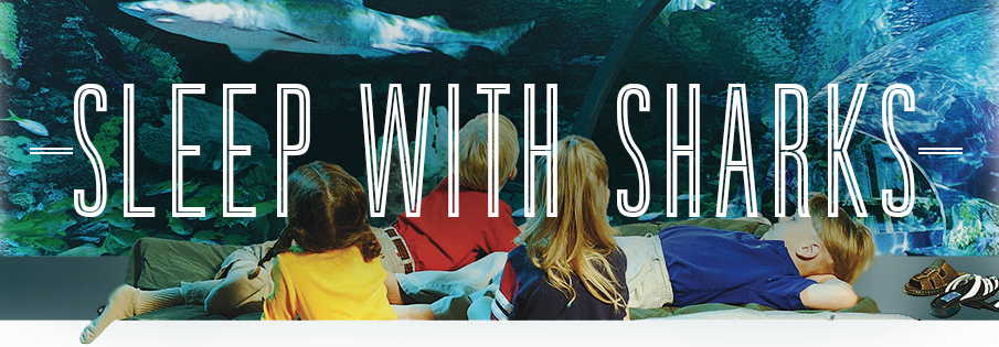 sleepwithsharks-header