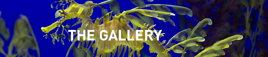 the gallery - aquarium of canada