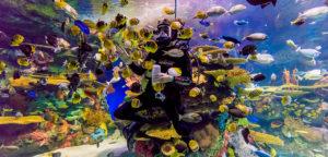 scuba-diver-ripleys-aquarium-canada