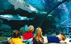 Education Aquarium Of Canada