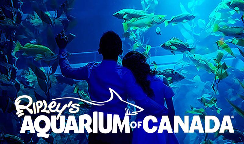 Ripley's Aquarium of Canada located in Toronto, Ontario