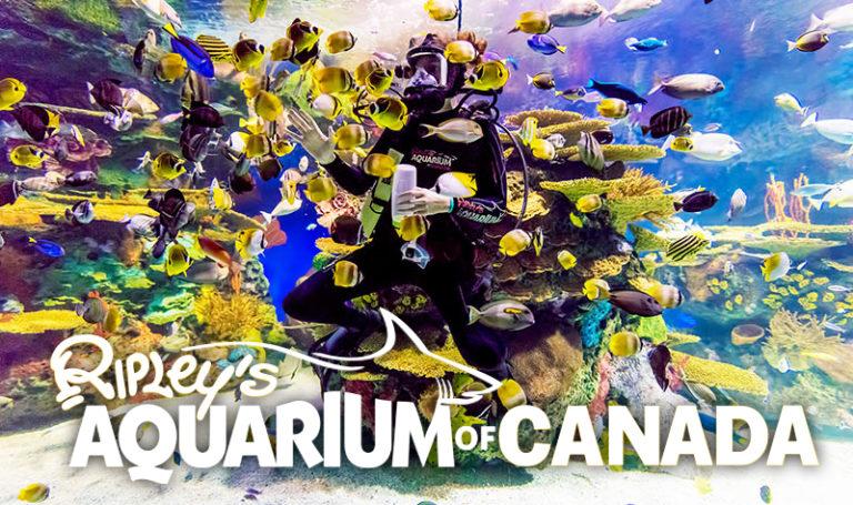 Visit Ripley Aquarium Canada Toronto dive show