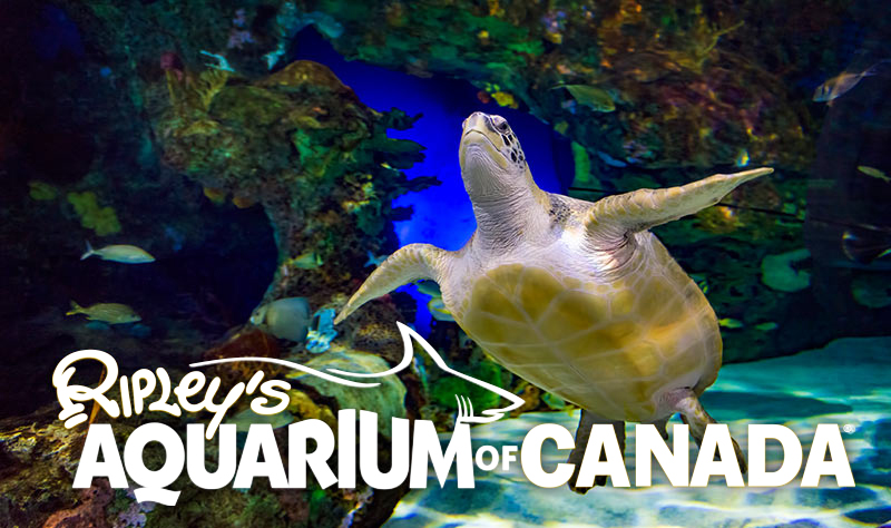 Sleepovers Ripley 39 S Aquarium Of Canada