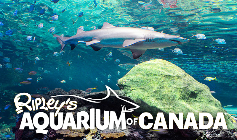 Ripley aquarium coupons toronto