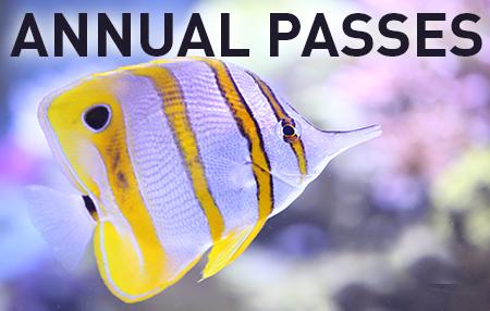 RAOC-event-annualpasses-450x286-accesso