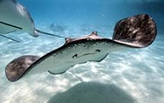 educational program ripleys aquarium