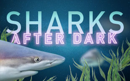 sharks after dark