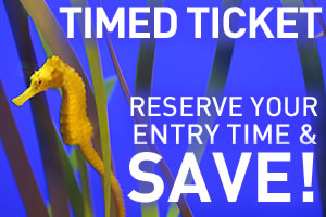Tickets_Timed