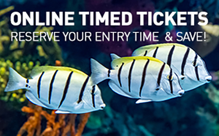 online timed tickets