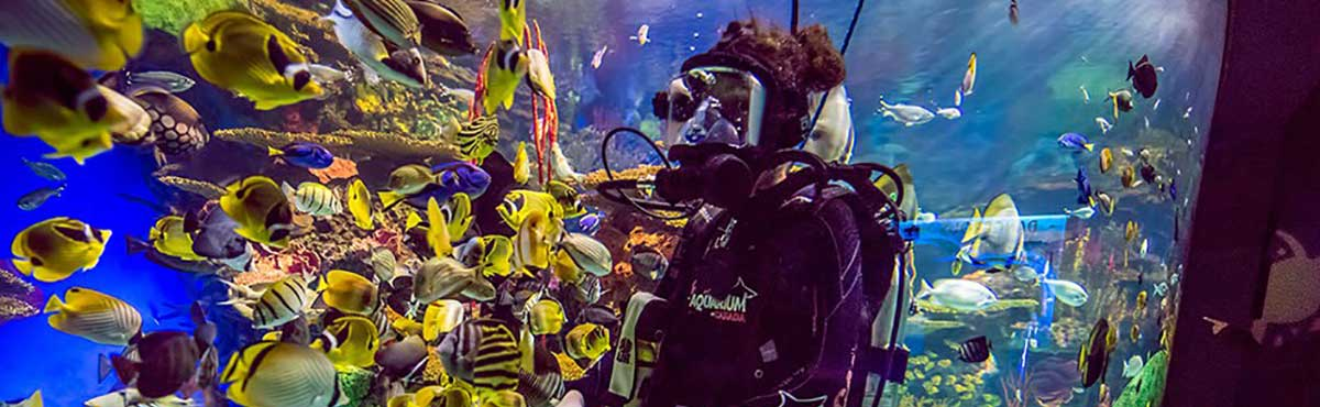 Dive Shows and Aquarist Talks
