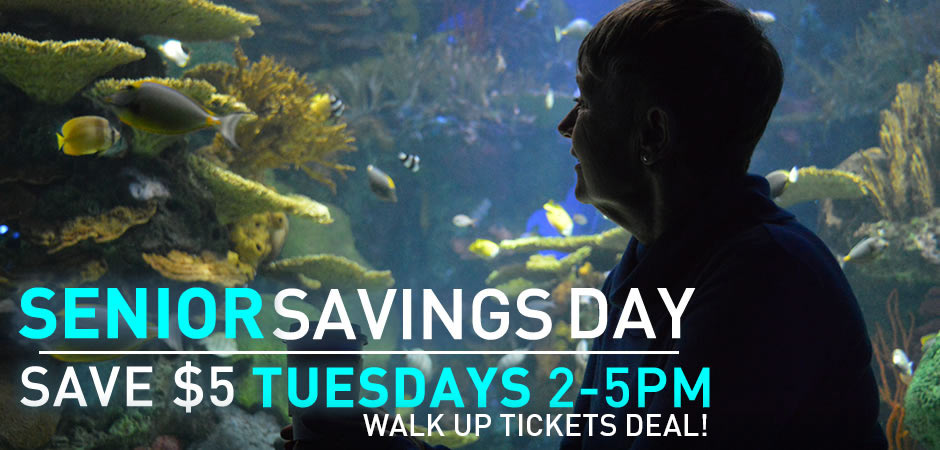 Discount coupon for ripley's aquarium of canada toronto