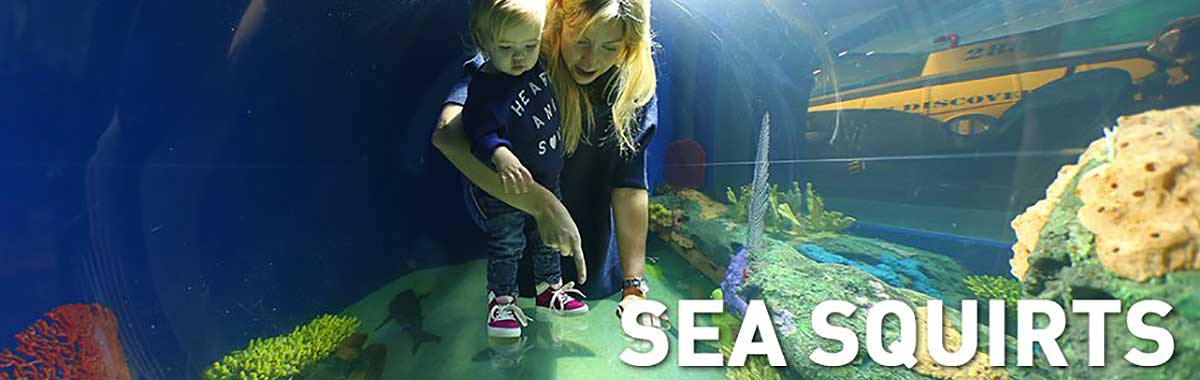 Ripley sAquarium-Sea Squirts Program
