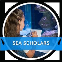 sea scholars