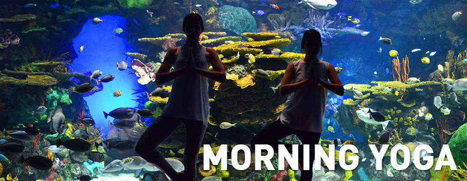 MorningYoga
