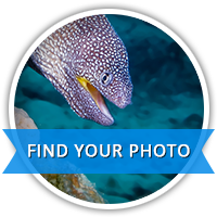 Find Your Photo