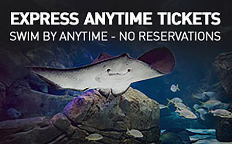 express anytime tickets