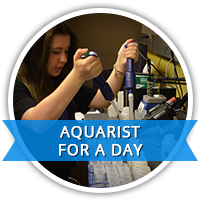 Aquarist for a day