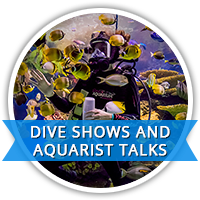 dive-shows