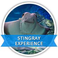 stingray experience