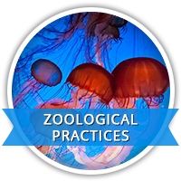 Zoological Practices