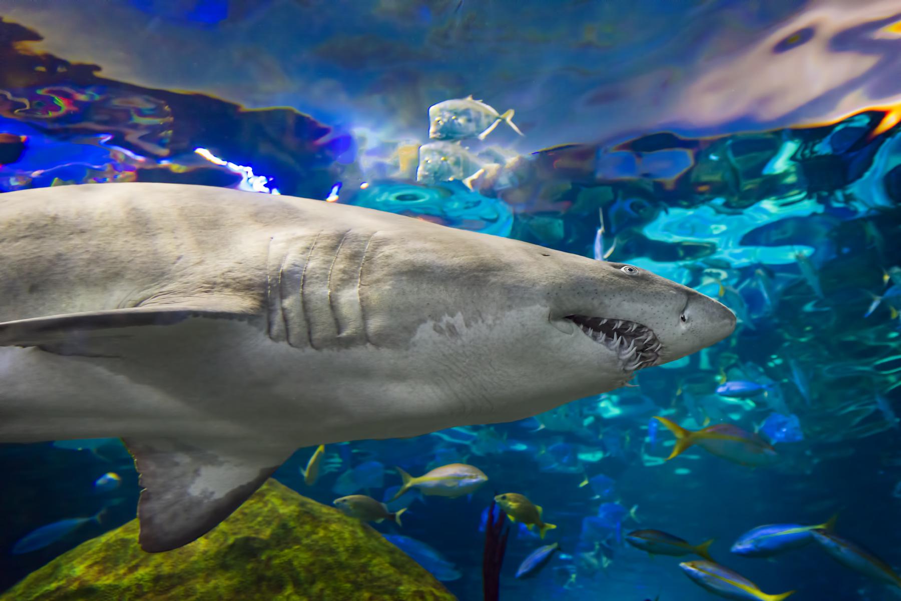 How Long To Tour Ripley S Aquarium