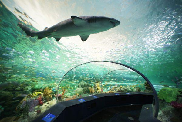 dangerous-lagoon-tunnel