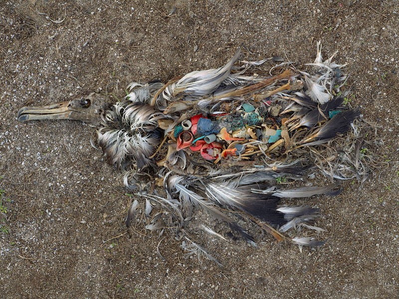 plastic-pollution-bird