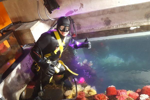 anemone-ripleys-aquarium