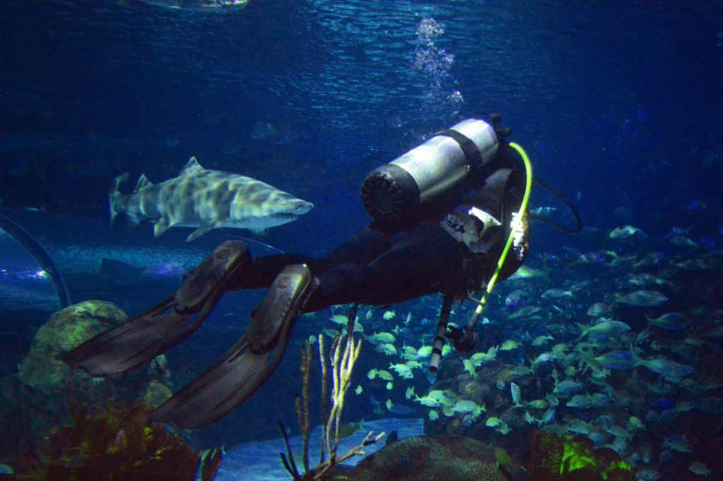 ripleys-aquarium-canada-discovery-dive
